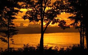 plants, nature, lake, landscape, photography, trees