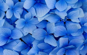 flowers, blue, nature, photography