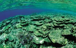 underwater, nature, water, sea, photography