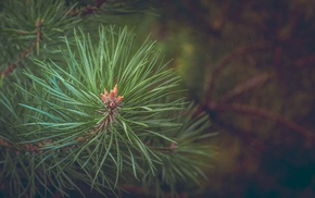 trees, closeup, detailed, thorns, nature, depth of field