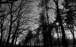 Serbia, monochrome, forest, park, nature