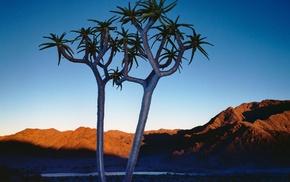 photography, landscape, desert, hills, plants