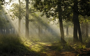 plants, landscape, photography, forest, sun rays, trees