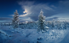 forest, snow, Czech Republic, Sun, cold, winter