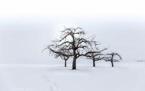 trees, snow, landscape, nature, seasons