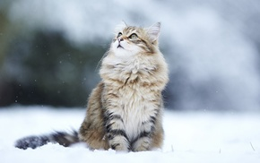 looking up, cat, snow, animals