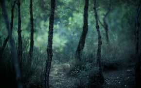 blurred, forest, nature, trees