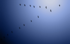 birds, nature, animals, photography, sky