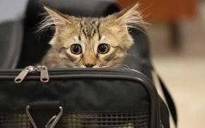 bag, animals, cat