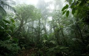 jungle, nature