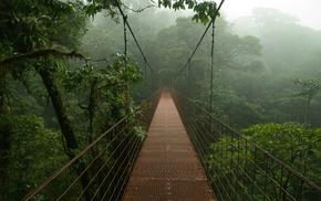 jungle, Costa Rica, mist, bridge, nature, rain