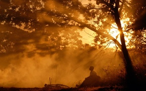 trees, mist, sun rays, National Geographic