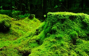 plants, forest, nature, leaves, moss, trees