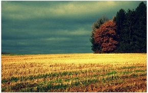 field, trees, dry grass, photo manipulation, clouds