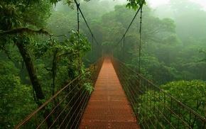 trees, rainforest, forest, bridge, nature, photography