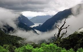 landscape, mist, nature, shrubs, fjord, trees
