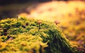 green, closeup, mushroom, nature