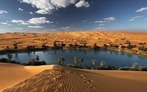 landscape, palm trees, desert