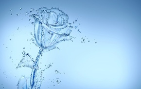 water, rose, abstract