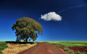 trees, landscape, clouds, field