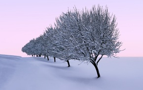 winter, seasons, landscape, trees, nature