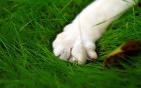 paws, cat