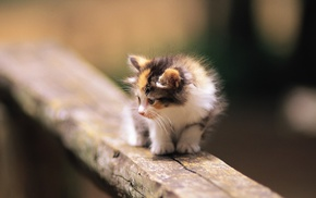 kittens, wood, baby animals, animals, depth of field