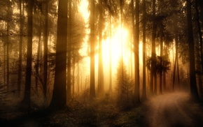 sunlight, trees, forest, nature