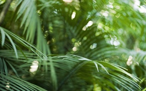 plants, depth of field, nature, photography, ferns, tropical