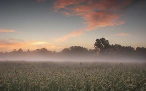 trees, landscape, plants, photography, nature, mist