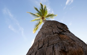 worms eye view, trees, palm trees, nature, photography