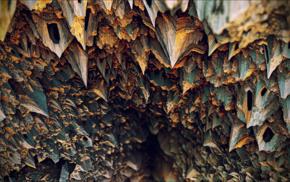 abstract, fractal, digital art