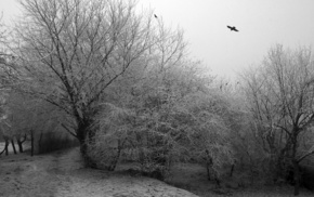 trees, path, monochrome, winter, cold, dark