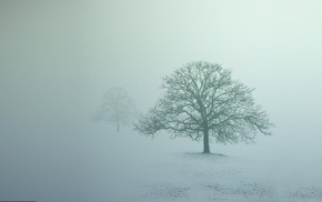 mist, winter, photography, trees, nature, snow