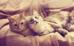 animals, cat, pet
