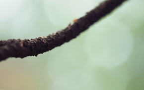 branch, nature, macro, photography