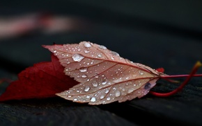 fall, wet, wood, water drops, nature, wooden surface