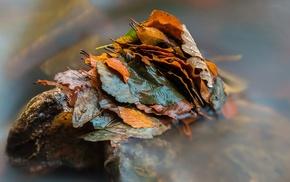 stone, wet, closeup, long exposure, leaves, water