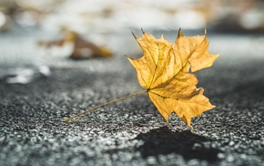 urban, leaves, depth of field, photo manipulation, shadow, fall