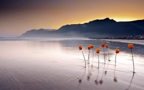 water, flowers, landscape, nature