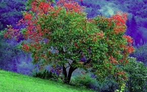 nature, landscape, trees