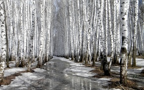 winter, trees, snow, nature