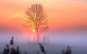 winter, nature, trees, landscape, sunlight