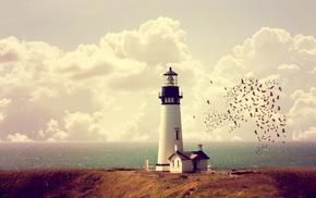 lighthouse, birds