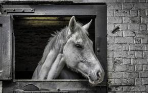 horse, animals