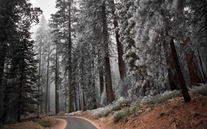 trees, snow, road, forest, winter