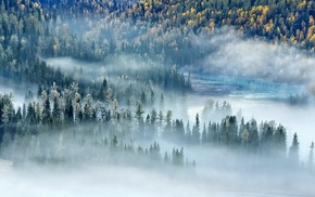fall, forest, morning, river, landscape, sunlight