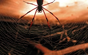 spider, animals, macro