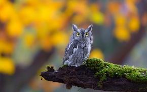 owl, animals, birds