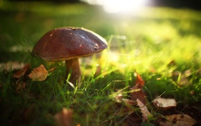 macro, mushroom, grass